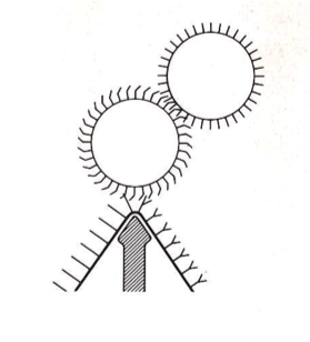 Diagram showing the card wire teeth for cotton or cellulose fibre velvets